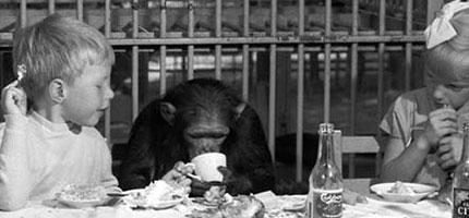 這個1955時期的動物園真的太奇怪了...你一定要看看那邊的黑猩猩每天都在做什麼。