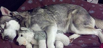 這24隻抱著布娃娃睡覺的小動物會馬上把你的心融化掉。