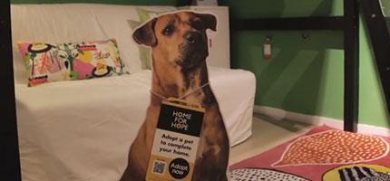 ikea把流浪狗的紙板放在他們的樣品屋裡面
