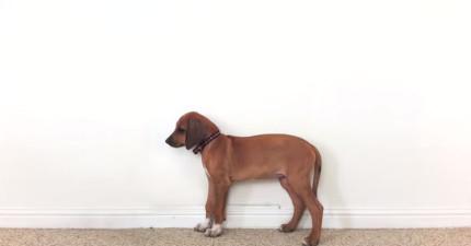 狗狗23秒成長到3歲