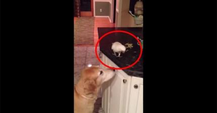 鳥幫助狗狗把食物都吃光