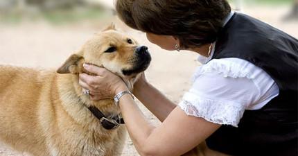 人類跟狗溝通