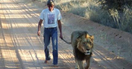 你可能覺得獅子很危險,但這名男子和他最要好的朋友之間的感情真的會打動你!