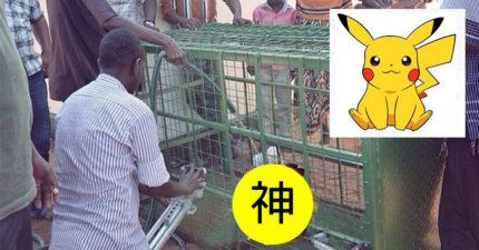 這個肯亞村民宣稱抓到「皮卡丘」還把他養在籠子裡!但當大家上前一看都忍不住笑到胃抽筋了...