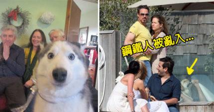 30張被毀掉卻變更好的「狗狗亂入照」居然不讓主人被求婚?
