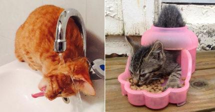 20個「貓皇最不讓奴才看到」的出糗爆笑時刻 水不是這樣喝的啦~