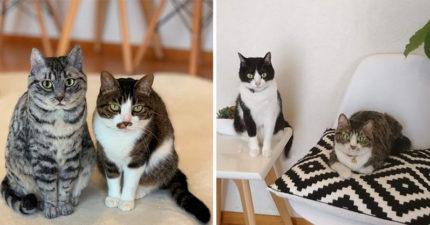 網超神製作「寵物羊毛氈」爆紅 拿「真貓對比」根本沒破綻!