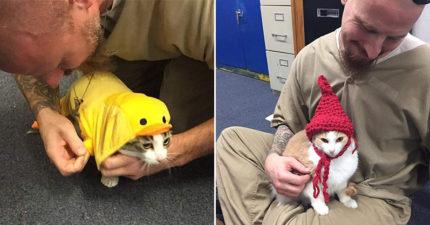 監獄讓受刑人「室友變成貓咪」!幾年後「硬漢全變貓奴」舉動超有愛
