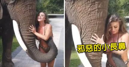 影/大象初見「超辣比基尼妹子」太興奮 狂用「象鼻」撥開布料…超害羞畫面曝光!