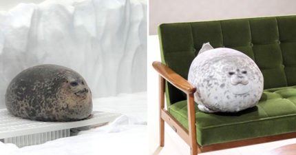 大阪海遊館推超人氣「圓筒形海豹」抱枕!網放大看「身體花紋」超驚喜:可愛到瘋掉❤