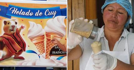 國外推「天竺鼠口味冰淇淋」意外爆紅 老闆娘曝光「超噁製作過程」沒人敢吃!