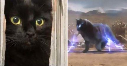 影/他把貓咪「P進好萊塢電影」畫面太爆笑!神演出《格雷的五十隻貓》引瘋傳:演技太厲害