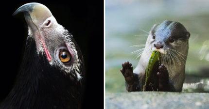 「鱷魚先生」親兒成天才動物攝影師 猛蛇在臉前「下秒就親到」的微距照太驚人!