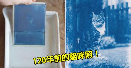 攝影師意外找到「120年前的底片」 沖洗發現「貓咪獨照」背後故事超唯美❤