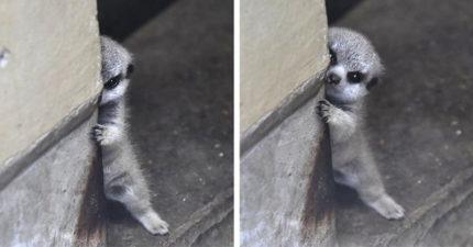15隻「超想抓來抱抱」的害羞小動物 狗狗覺得尷尬「先遮臉」