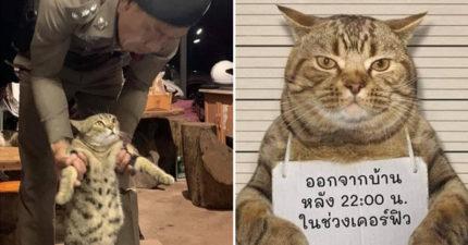 虎斑貓「不甩宵禁出門」被警活逮 無辜臉「犯人照」:本喵以後不會了