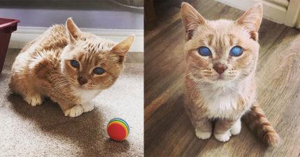 貓咪出生就被丟掉「永遠長不大」 因一雙「夢幻藍眼」意外圈粉