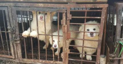 動保團體爆料:南韓超多人還在喝「狗肉湯」現在正在歡慶節日