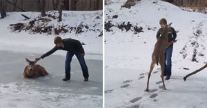 狂男「大媽式扯耳」救鹿離開冰湖 「與鹿共舞」結局超意外