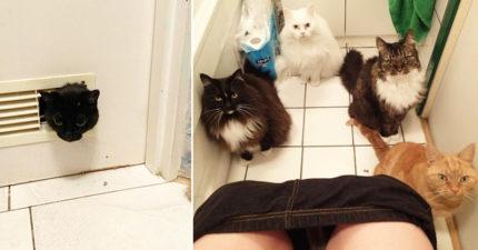 44隻「怕你在廁所會孤單」的貓貓觀眾 奴才的隱私權是不存在的!
