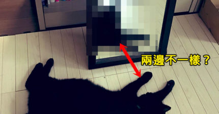 網友拍家貓鏡中照驚現「靈異現象」 明明在睡覺又好像醒著?