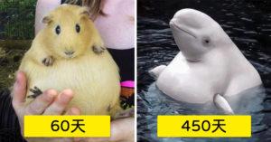 16種動物「懷孕週期」時間超意外!最長「人類兩倍」媽媽辛苦了