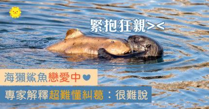 萌海獺「緊抱鯊魚」超幸福 專家給驚人答案:誰吃誰很難說!