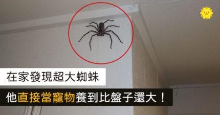 在家發現巨蜘蛛...他「當室友」養到肥滋滋:牠跟你們想的不一樣