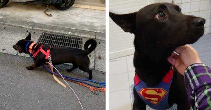台灣街頭驚見狗狗「一次用5條牽繩」 主人曝洋蔥原因