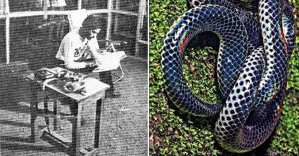 想證明「毒蛇友善不咬人」 他把自己關「72條毒蛇玻璃房」待72小時