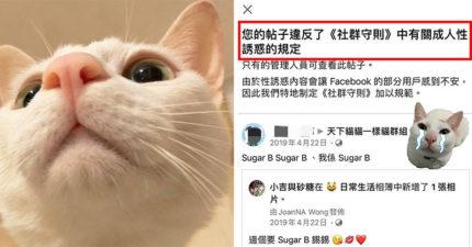 分享可愛貓照「慘被臉書下架」 主人看「違規通知」傻眼:讓人不安?
