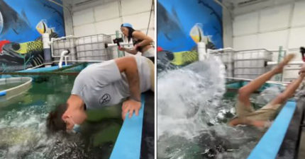百萬網紅挑戰「用嘴餵巨魚」 瞬間「整個人沉水底」