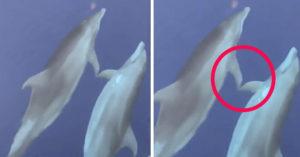 影/動物都會放閃?出海驚見「海豚甜蜜行為」專家:可以減壓